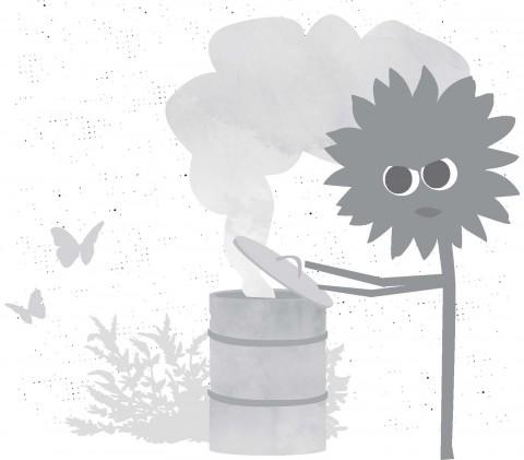 Sonnenblume - Umwelt und Klima